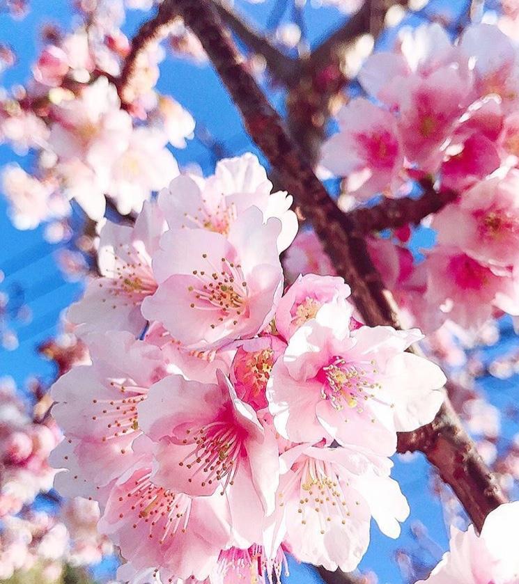 【スタッフブログ】お花見とイチゴ狩り