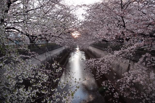 【スタッフブログ】春はやっぱりお花見!